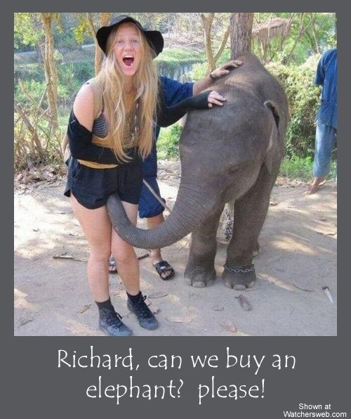 Image 1: Un elephant la bouffe la chatte avec sa trompe