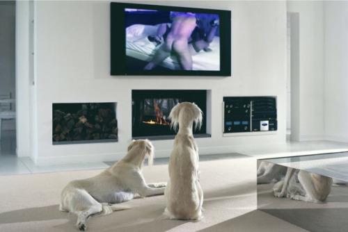 Image 1: Cette photo prouve que les chiens adorent le porno