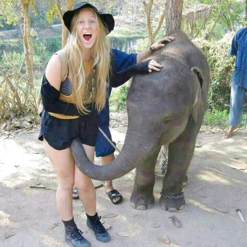 Image 1: Vous voulez du porno avec un elephant