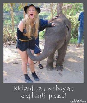Un éléphant la bouffe la chatte avec sa trompe
