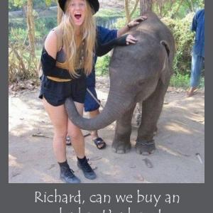 Un éléphant la bouffe la chatte ave...