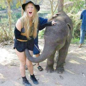 Vous voulez du porno avec un éléphant ?
